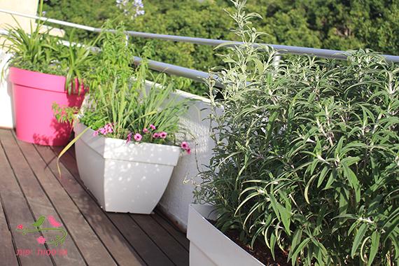 מרפסות יפות עיצוב צמחיה במרפסת גג בתל אביב