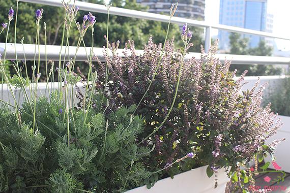 מרפסות יפות עיצוב צמחיה במרפסת גג