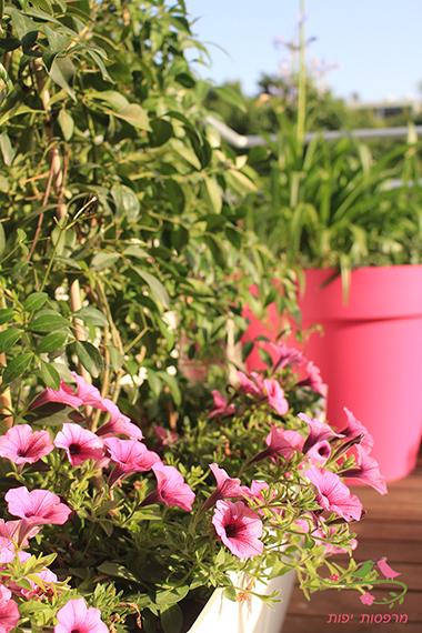 מרפסות יפות עיצוב מרפסות גג ותכנון צמחיה