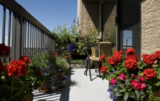 מרפסות יפות צמחים למרפסת דרומית