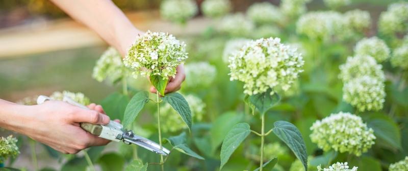 מרפסות יפות עיצוב מרפסות זמן גיזום פרחים אופטימלי לצמחיה