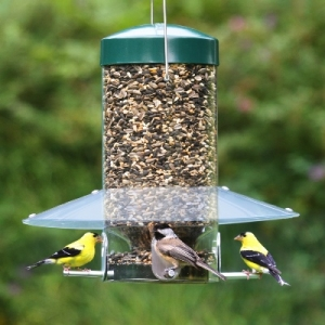 מרפסות יפות עיצוב מרפסות זמן האכלת ציפורים אופטימלי במרפסת