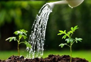 מרפסות יפות עיצוב מרפסות זמן השקיה אופטימלי לצמחיה