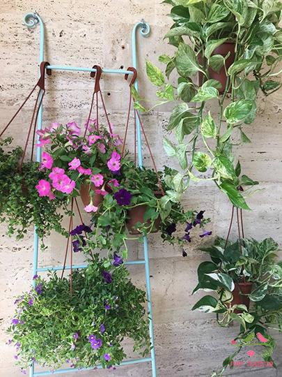 מרפסות יפות צמחיה תלויה על סולם