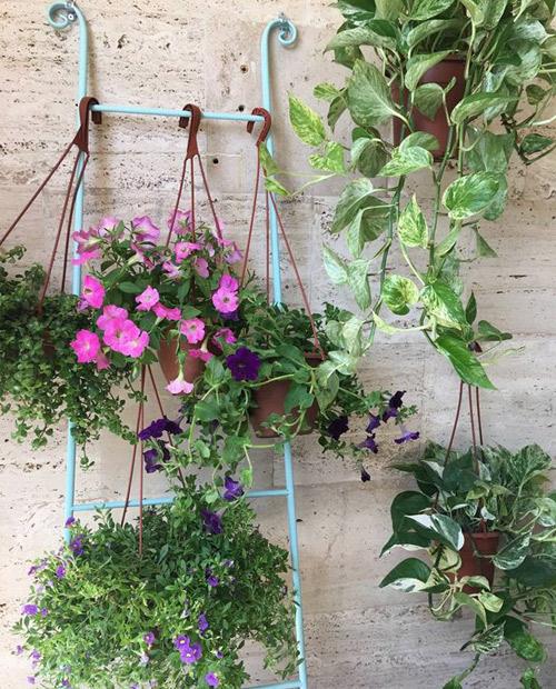 סולם עם צמחיה בעיצוב מרפסת