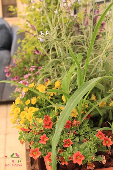 שילובי צמחיה עונתית ורב שנתית