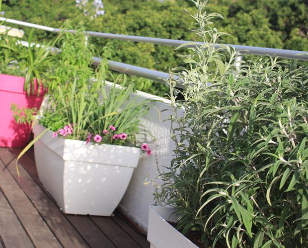 אדניות וצמחיה בעיצוב מרפסת