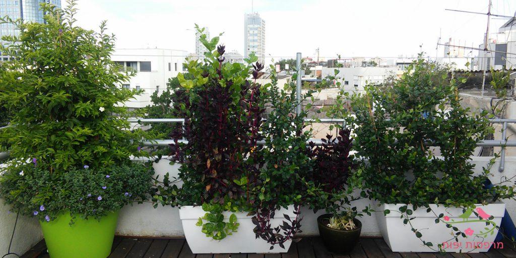 מרפסות יפות עיצוב מרפסת גג בתל אביב