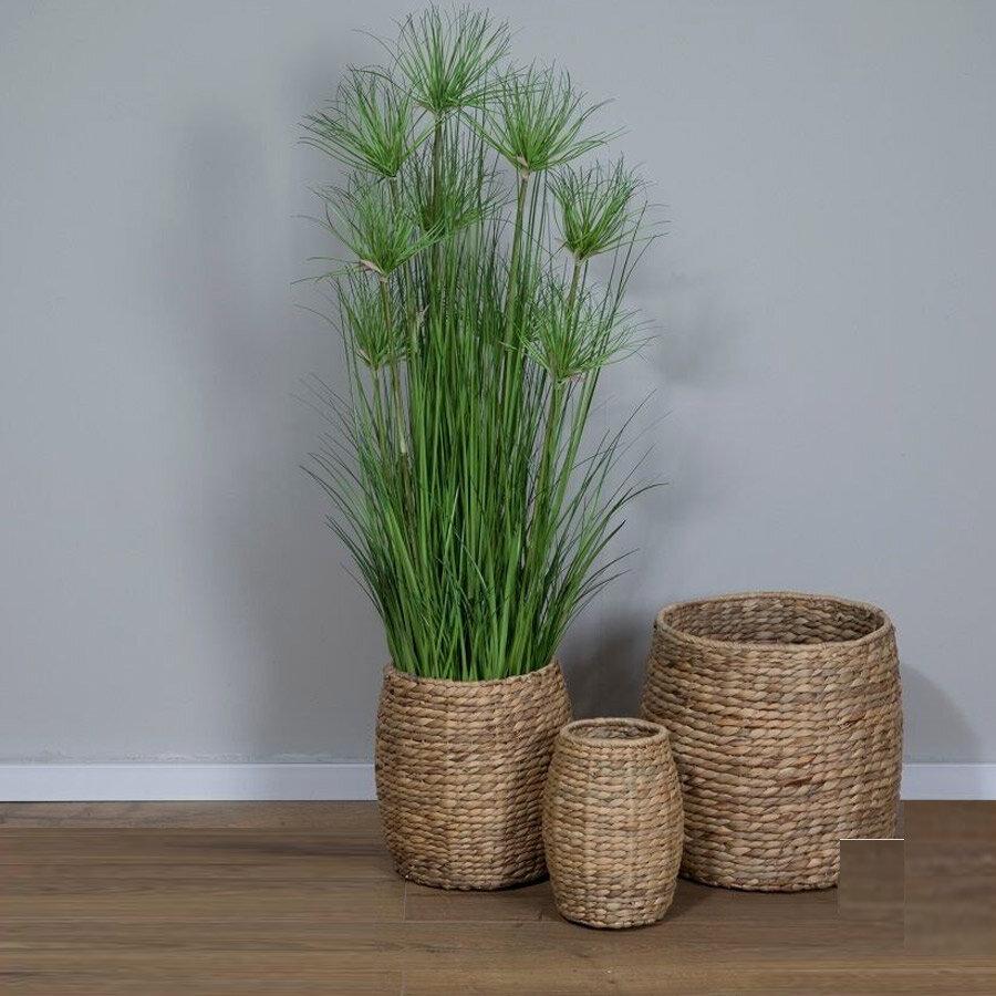 עציץ Water Bamboo